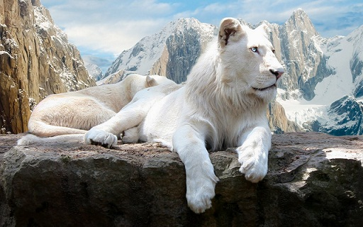 Out-of-the-world-lions-16